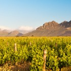 De bons vins en Afrique du Sud