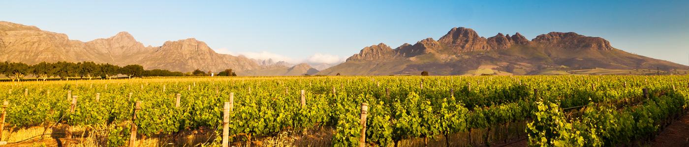 De-bons-vins-en-Afrique-du-Sud-VoyagePocket