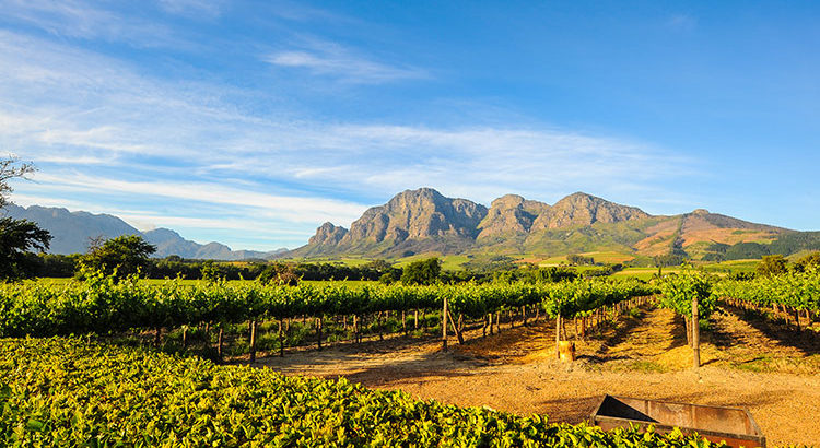 de-bons-vins-en-afrique-du-sud