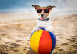 vacances-chien